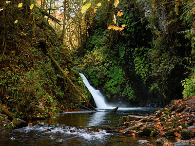 Photograph - Autumn In Goldstream by Keith Boone