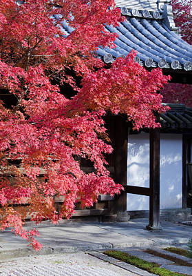 Red Tree Photograph - Autumn In Japan by Lise-Lotte Larsson