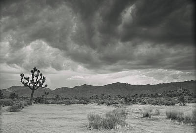 Photograph - Autumn In Joshua Tree National Park by Kunal Mehra