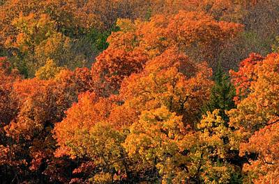 Photograph - Autumn In Kansas City by Don Wolf