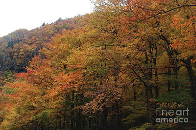 Photograph - Autumn In Layers - Stowe Vermont by Felipe Adan Lerma