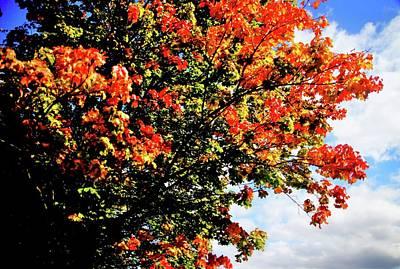 Photograph - Autumn In Musselburgh by Nik Watt