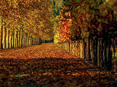 Autumn In Napa Valley Art Print by Bill Gallagher