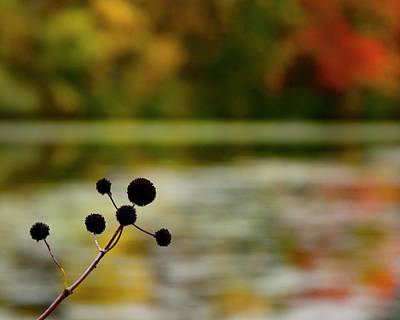 Photograph - Autumn In Natick by Corinne Rhode