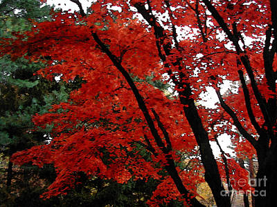 Autumn In New England Art Print by Melissa A Benson