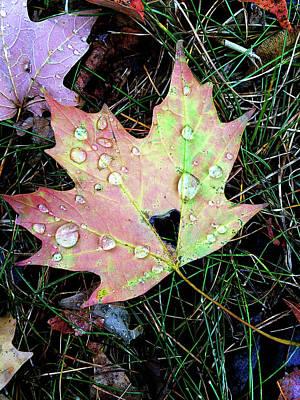 Photograph - Autumn In New York by Jennifer Karon