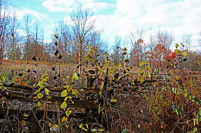 Photograph - Autumn In November by Debbie Oppermann