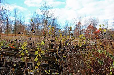 Photograph - Autumn In November by Debbie Oppermann