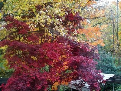 Autumn In October Art Print by Misty VanPool