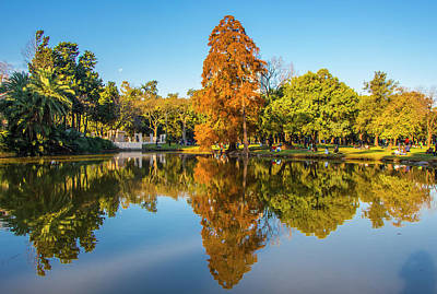 Photograph - Autumn In Parque Tres De Febrero, Buenos Aires by Venetia Featherstone-Witty