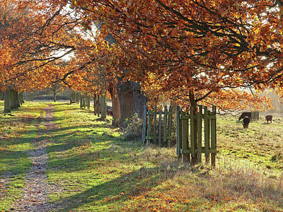Photograph - Autumn In Pishiobury Park by Gill Billington