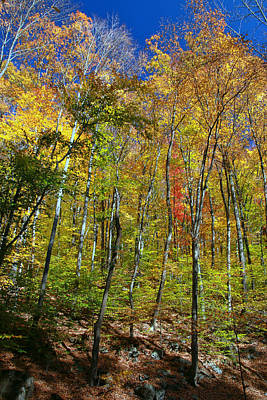 Photograph - Autumn In Schooley's Mountain Park 2 by Allen Beatty