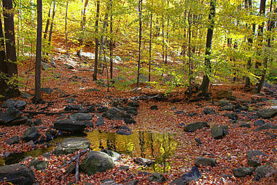 Photograph - Autumn In Schooley's Mountain Park by Allen Beatty