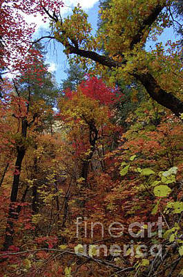 Photograph - Autumn In Sedona by Frank Stallone