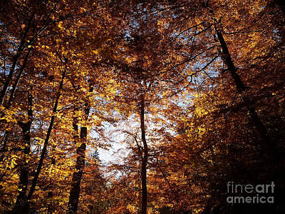 Photograph - Autumn In The Alps 3 by Rudi Prott