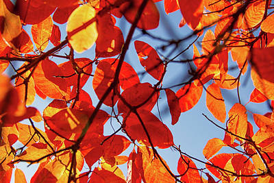 Photograph - Autumn In The Arboretum by Kunal Mehra