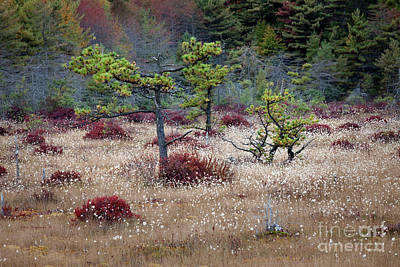 Photograph - Autumn In The Bog by John Stephens