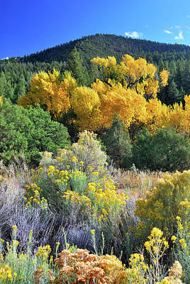 Photograph - Autumn In The Canyon by Ron Cline