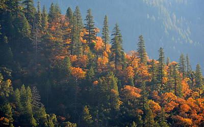 Art Print featuring the photograph Autumn In The Feather River Canyon by AJ Schibig