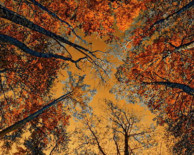 Photograph - Autumn In The Forest by Anthony Dezenzio