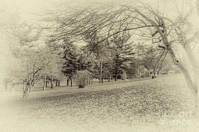 Photograph - Autumn In The Glen by William Norton