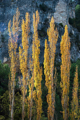 Autumn In The Hoz Del Escabas Gorge. In The Serrania De Cuenca, Spain - 3 Art Print by Peter Eastland