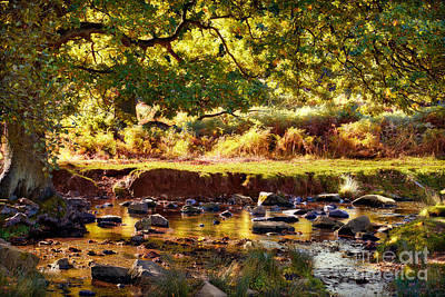 Brown Leaves Photograph - Autumn In The Lin Valley by John Edwards