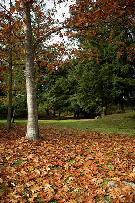 Photograph - Autumn In The Park by Edgar Laureano