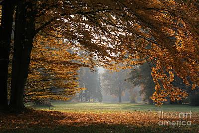 Buche Photograph - Autumn In The Park by Steffen Krahl
