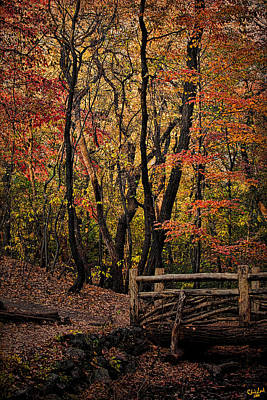 Photograph - Autumn In The Rambles by Chris Lord