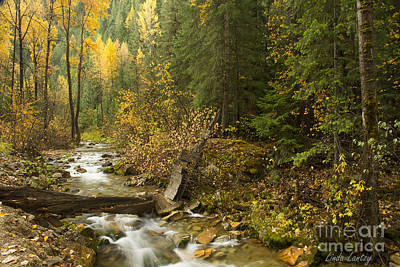 Autumn In The St Joe Art Print by Idaho Scenic Images Linda Lantzy