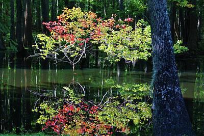 Photograph - Autumn In The Swamp by Cynthia Guinn