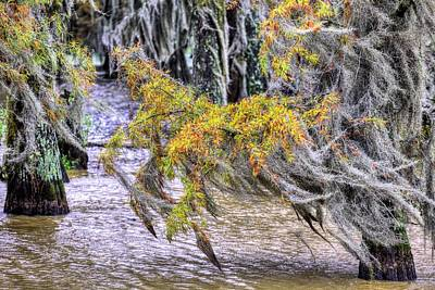 Cypress Swamp Photograph - Autumn In The Swamps by JC Findley