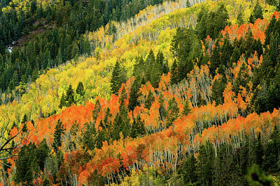 Photograph - Autumn In The Uintas by TL Mair