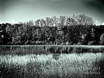 Photograph - Autumn In The Wetlands - Black And White by Frank J Casella