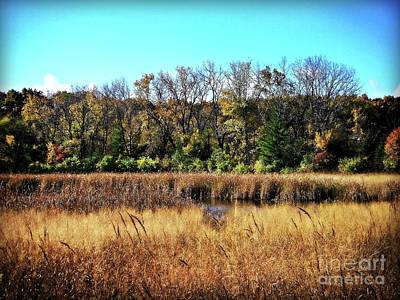 Photograph - Autumn In The Wetlands by Frank J Casella