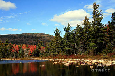 Photograph - Autumn In The White Mountains by Paula Guttilla