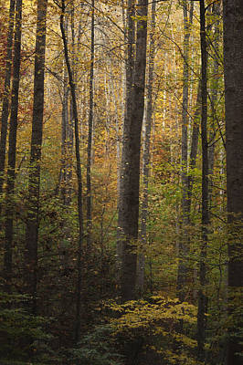 Smoky Mountains Photograph - Autumn In The Woods by Andrew Soundarajan
