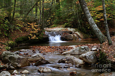 Photograph - Autumn In The Woods by Paula Guttilla