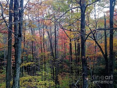 Photograph - Autumn In Vermont by Tamara Lee