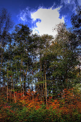 Wetlands Photograph - Autumn In West Hylebos by David Patterson