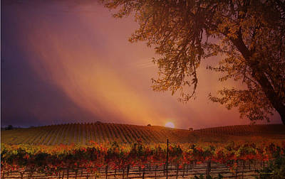 Autumn In Wine Country Art Print by Stephanie Laird