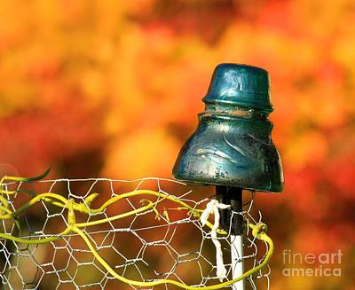 Photograph - Autumn Insulator by Debbie Stahre
