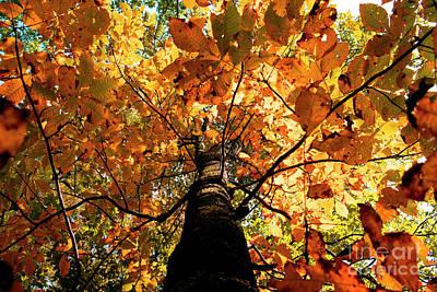 Autumn Is Glorious Art Print