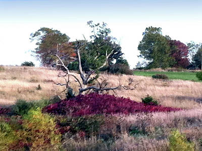 Photograph - Autumn Island In A Sea Of Grass by Steve Karol