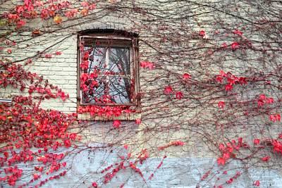 Photograph - Autumn Ivy by Karen Molenaar Terrell