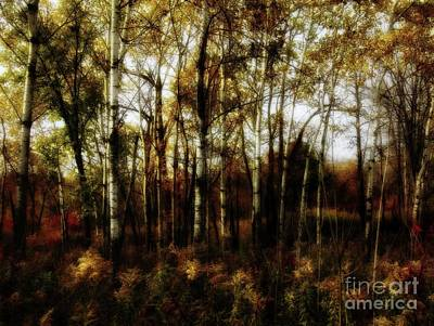 Photograph - Autumn by Jimmy Ostgard