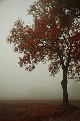 Fallen Leaf Photograph - Autumn by Art of Invi
