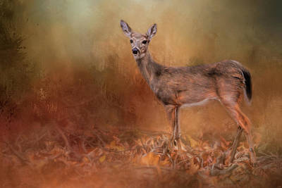 Photograph - Autumn Journey Deer Art by Jai Johnson