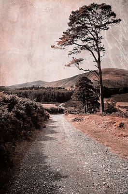 Photograph - Autumn Journey In Wicklow Hills. Ireland by Jenny Rainbow